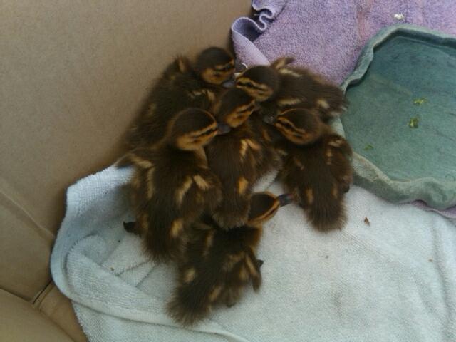 Babybirds 004